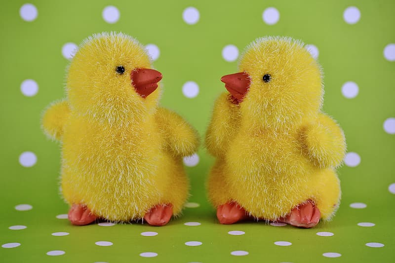 Two yellow ducklings photography