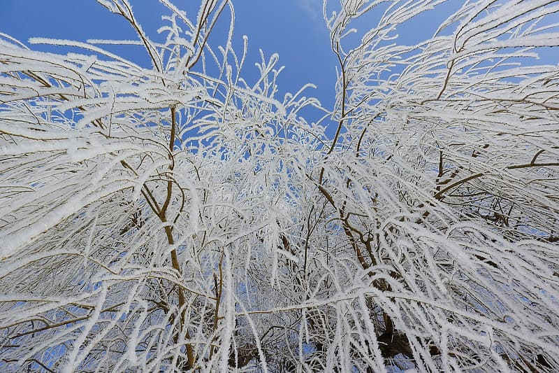 White tree branches under blue sky during daytime
