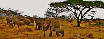 Family of elephants in the wild
