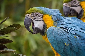 Selective focus photography blue-white-and-yellow macaw perching on tree