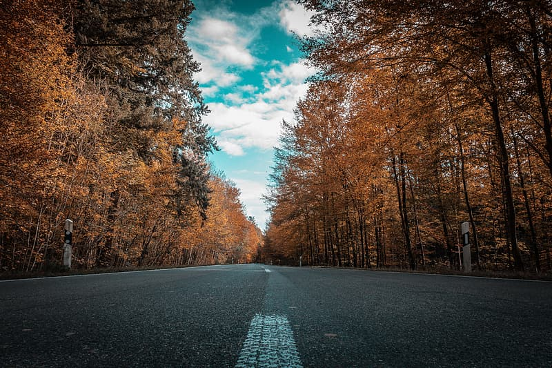 Gray concrete road surrounded by dried leaf trees