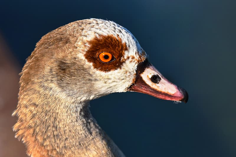Shallow focus photography of gray and brown bird
