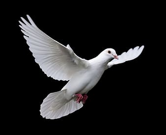 White dove flying during daytime