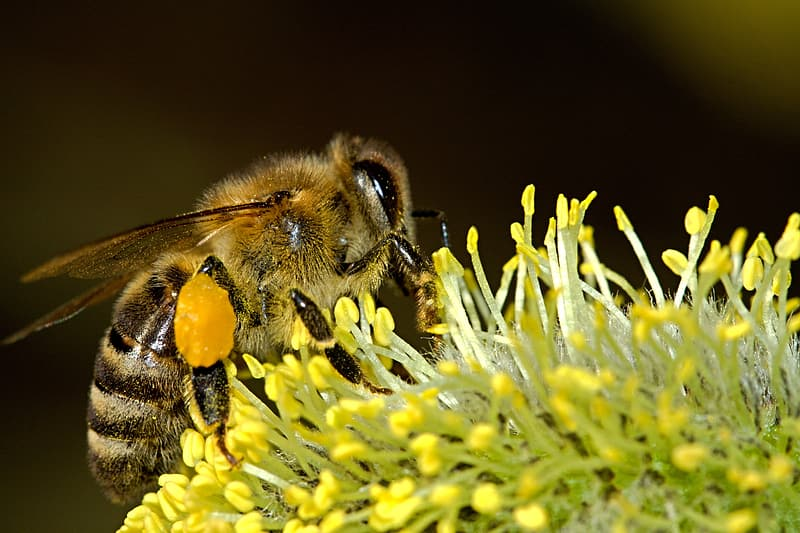 Micro photography of honey bee perched on flower
