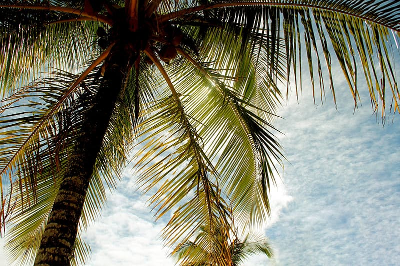 Green palm tree under white clouds during daytime