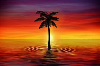 Palm tree on beach during sunset