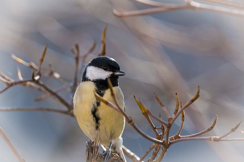 Black and yellow perched on tree trunk