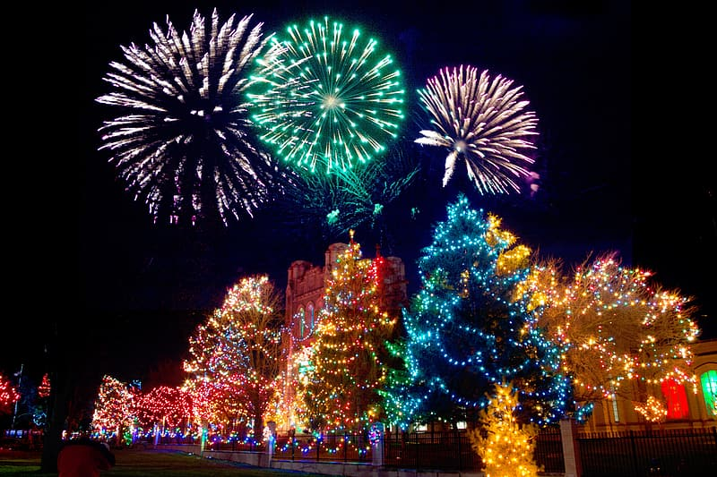 Lighted christmas trees photo during daytime