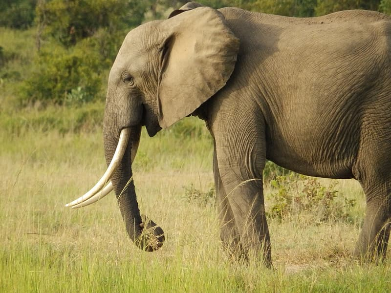 Gray elephant surrounded by grass during daytime