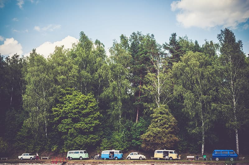 Cars lined up near trees