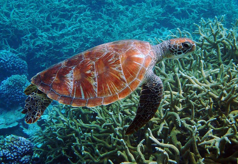 Brown and black turtle under body of water