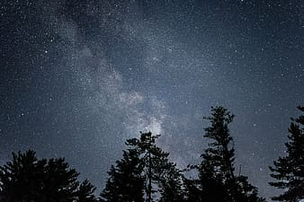 Low angle of trees under starry night