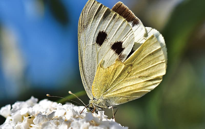 White and grey butterfly on brown wooden surface