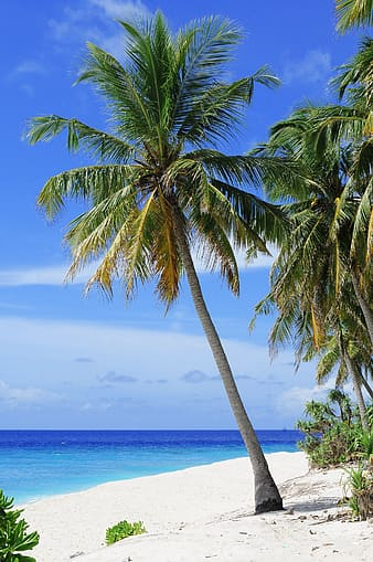 Photo of green coconut tree on seashore