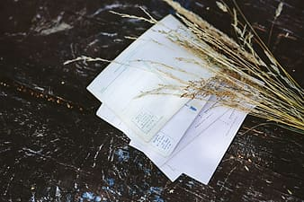 Old postcards with wheat