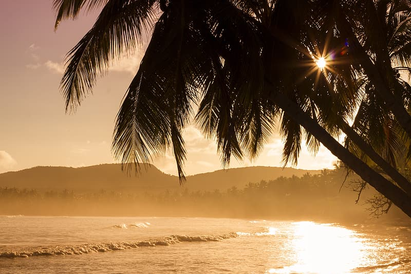 Photo of coconut trees near body of water during golden hour