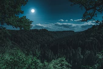 Aerial photography of forest during nighttime