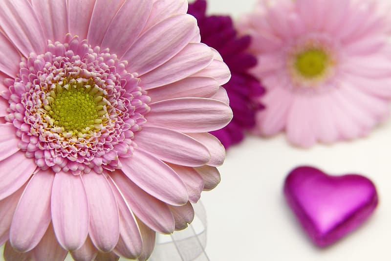 Pink and yellow flower in close up photography