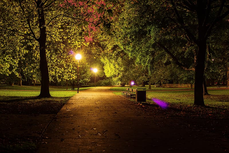 Lighted street lights and trees