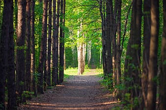 Brown pathway between green trees during daytime