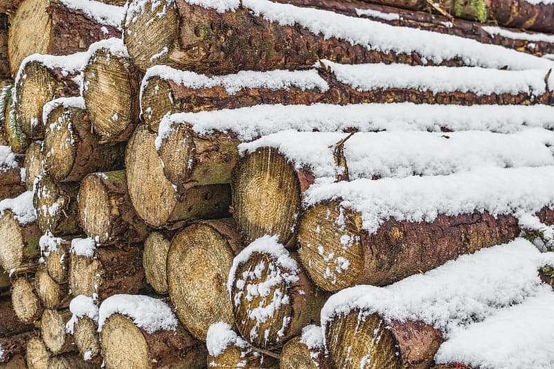Snow-covered brown tree log lot