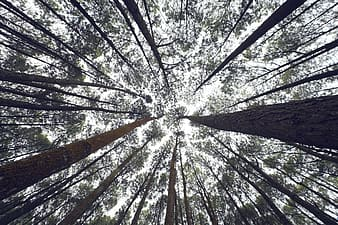 Low angle photograph of trees