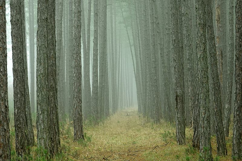 Green grass and trees covered with fog
