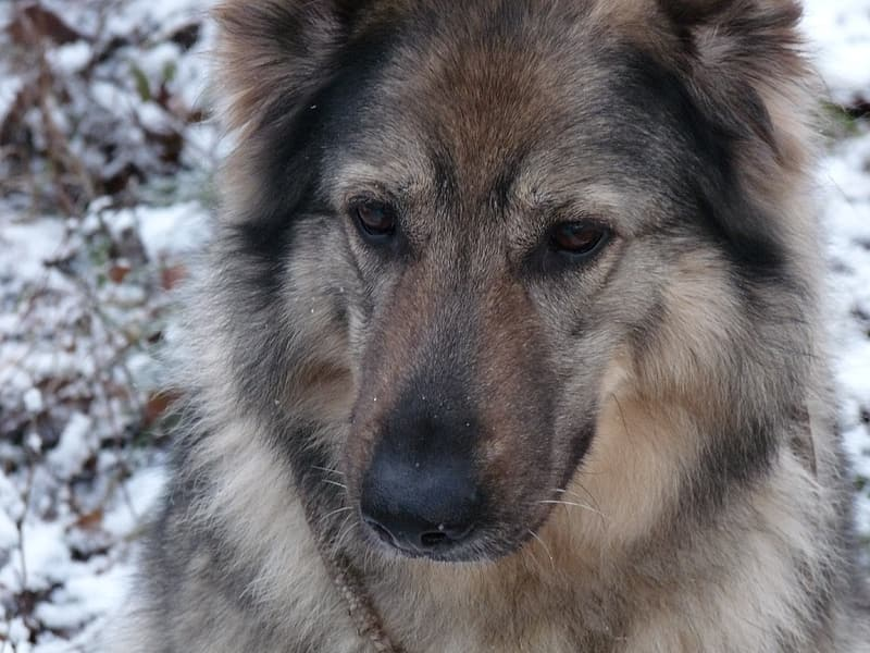 Medium short-coated brown and black dog during winter