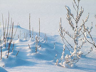 Photo of white snow covered with trees