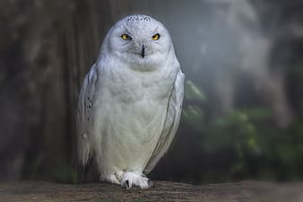 White owl perching on branch