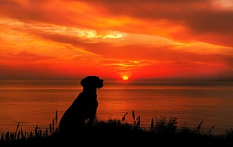 Silhouette of dog near body of water during sunset