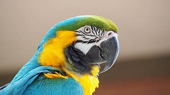 Teal, yellow, and green parrot