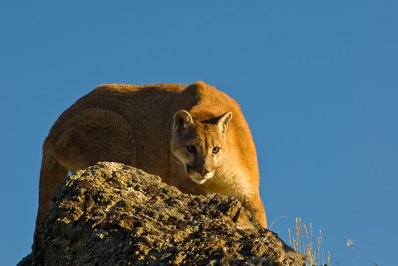 Wild photography lioness on gray rock