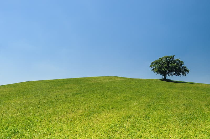 Photography of green tree on green grassy field during daytime