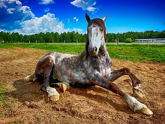 Brown, white, and gray horse \