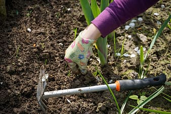 Person holding soil beside garden tool