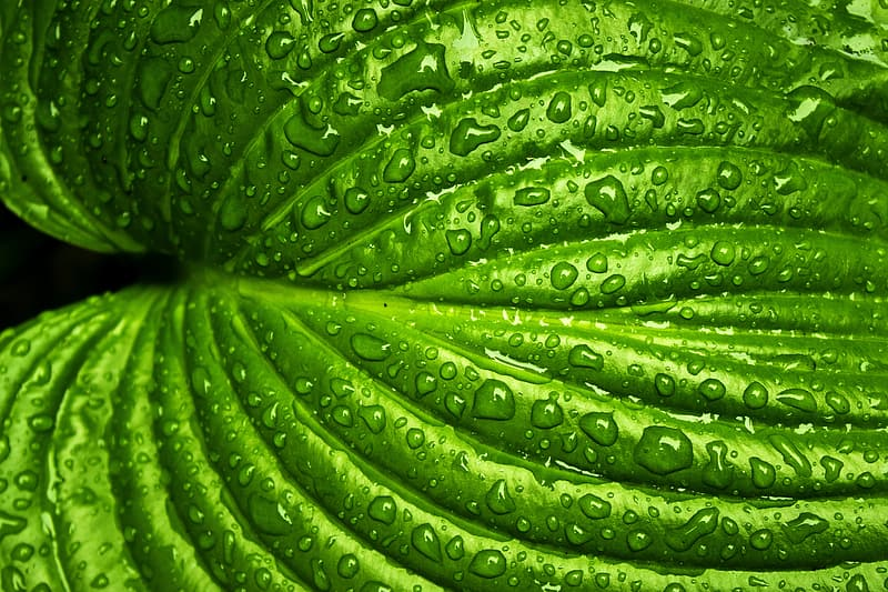 Macro photography of green leaf with water dew