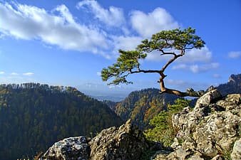 Green tree on top of mountain during daytime