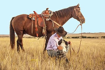 Cowboy sitting near merle Australian shepherd and brown horse on brown grass field during daytime