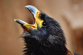 Black and yellow bird in close up photography