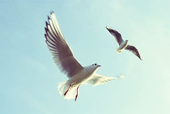 Two white birds flying