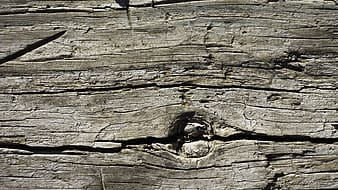 Close view of wooden wall