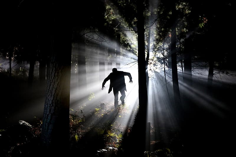 Crepuscular light passing through human figure in tree forest