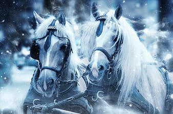 Two white and brown horses in snow