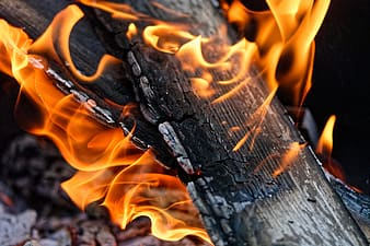 Fire in brown wooden log