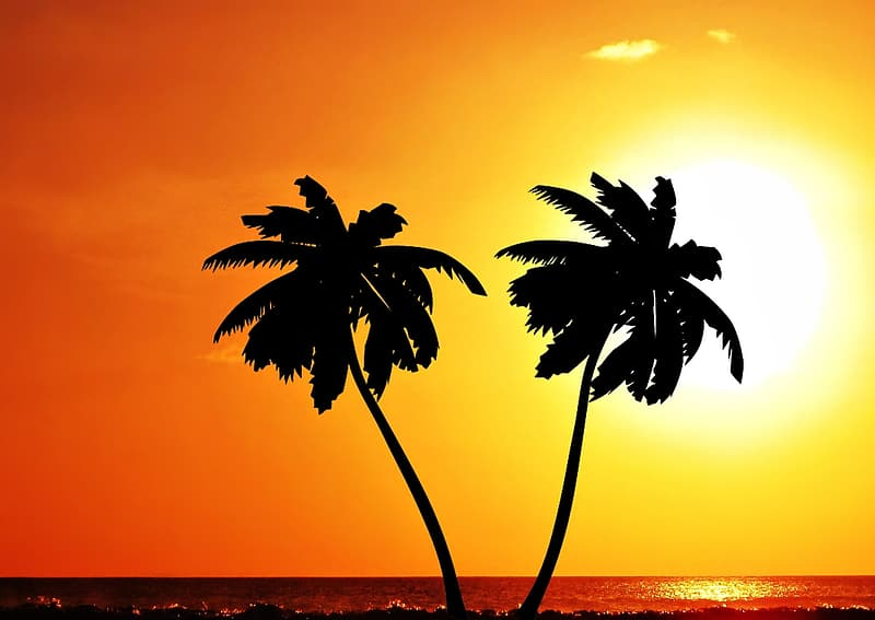 Silhouette coconut tress during golden hour