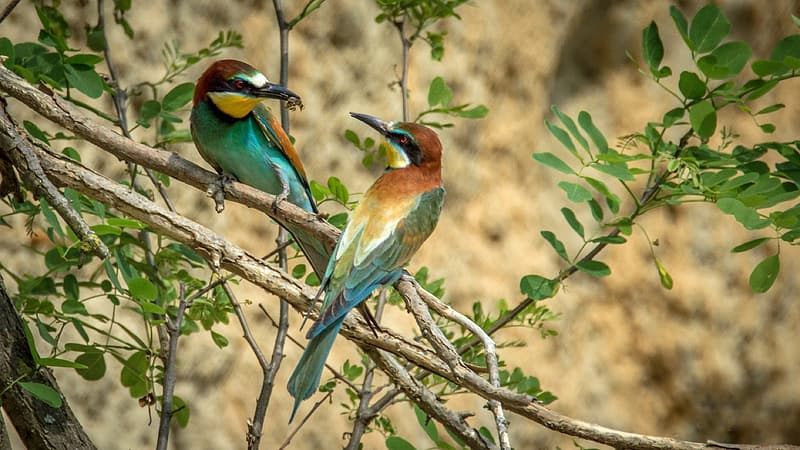 Two green-and-brown birds perched on a tree branch