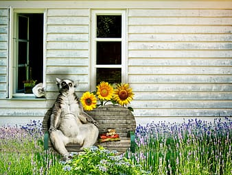 White and black animal sitting on brown wooden bench