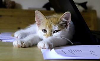 Orange and white tabby cat on brown wooden table