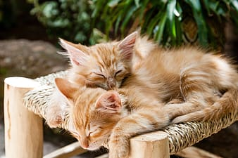 Two orange tabby kittens on brown surface